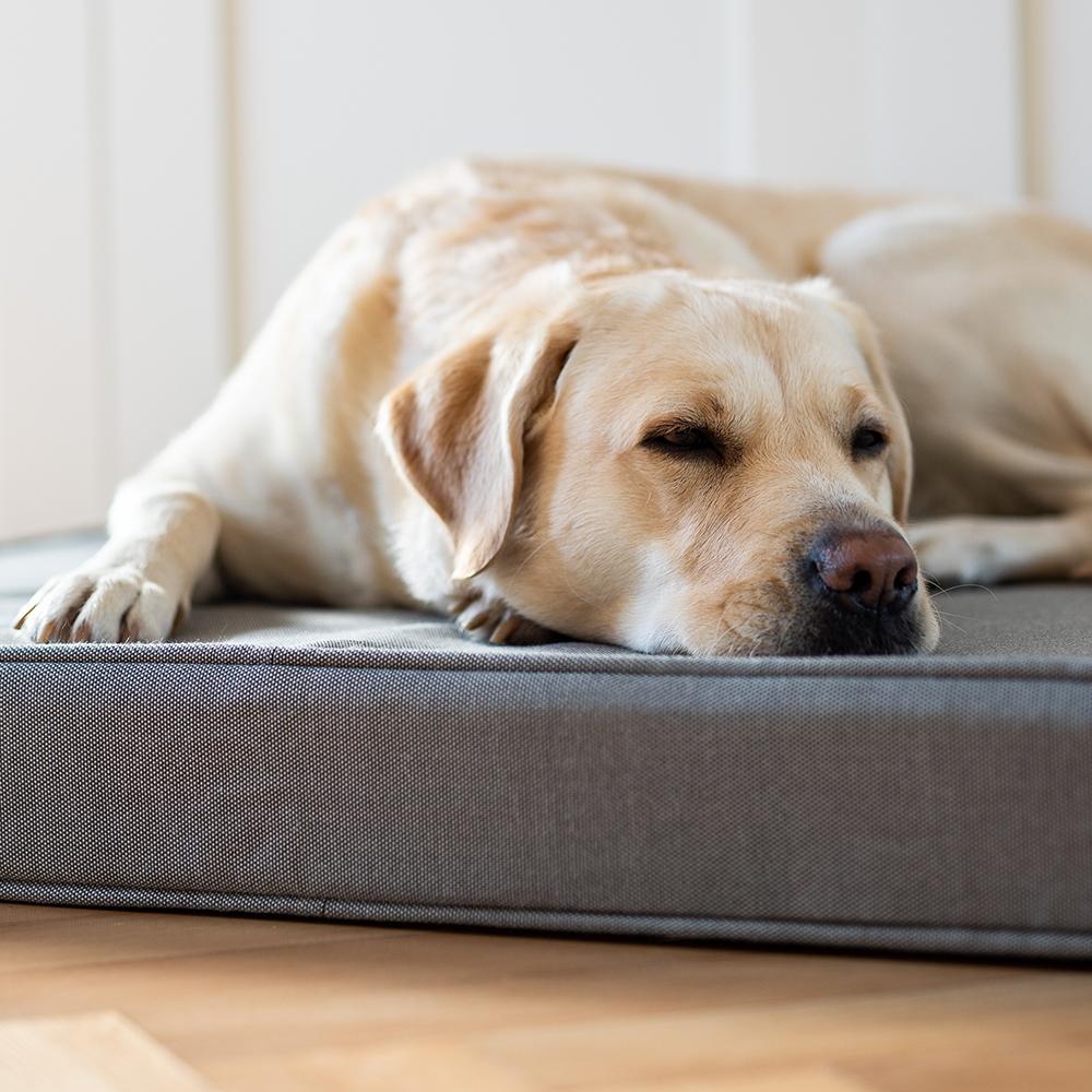 Warum ist erholsamer Schlaf für Hunde so wichtig?