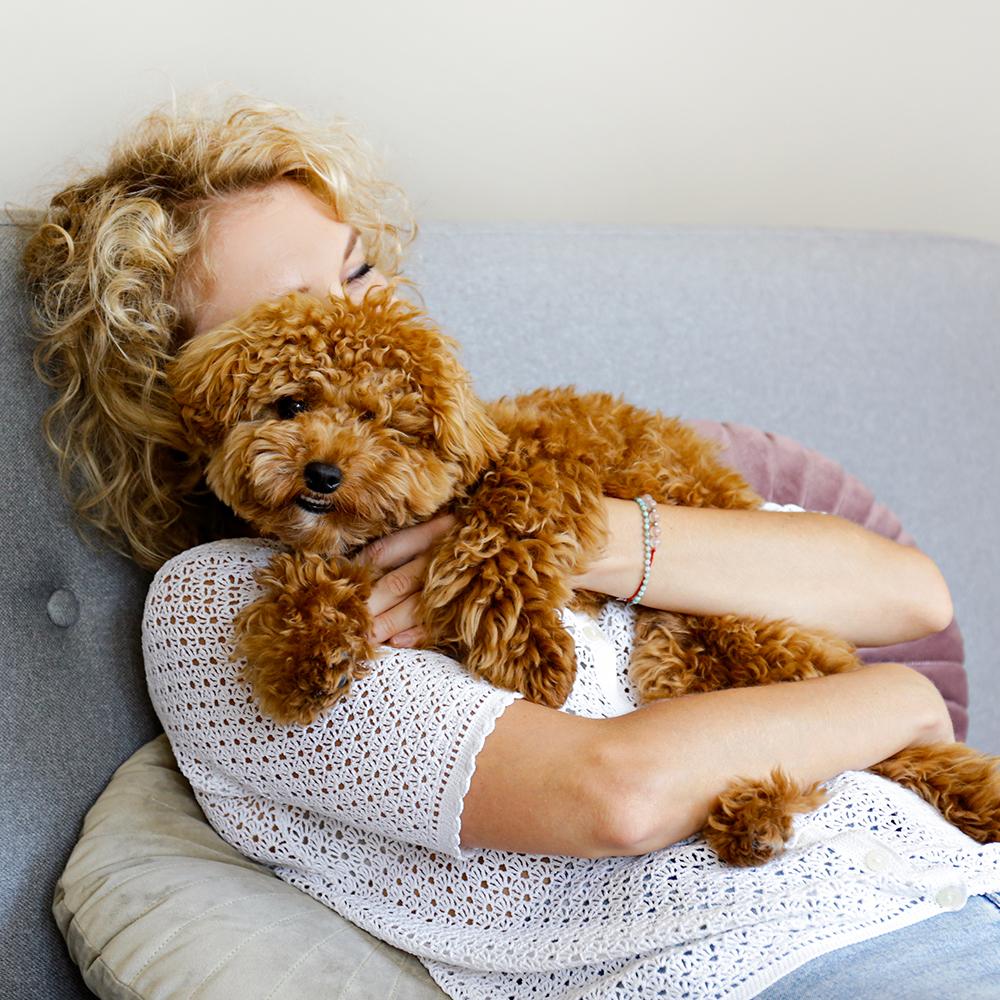 Der Traum vom eigenem Hund trotz Allergie