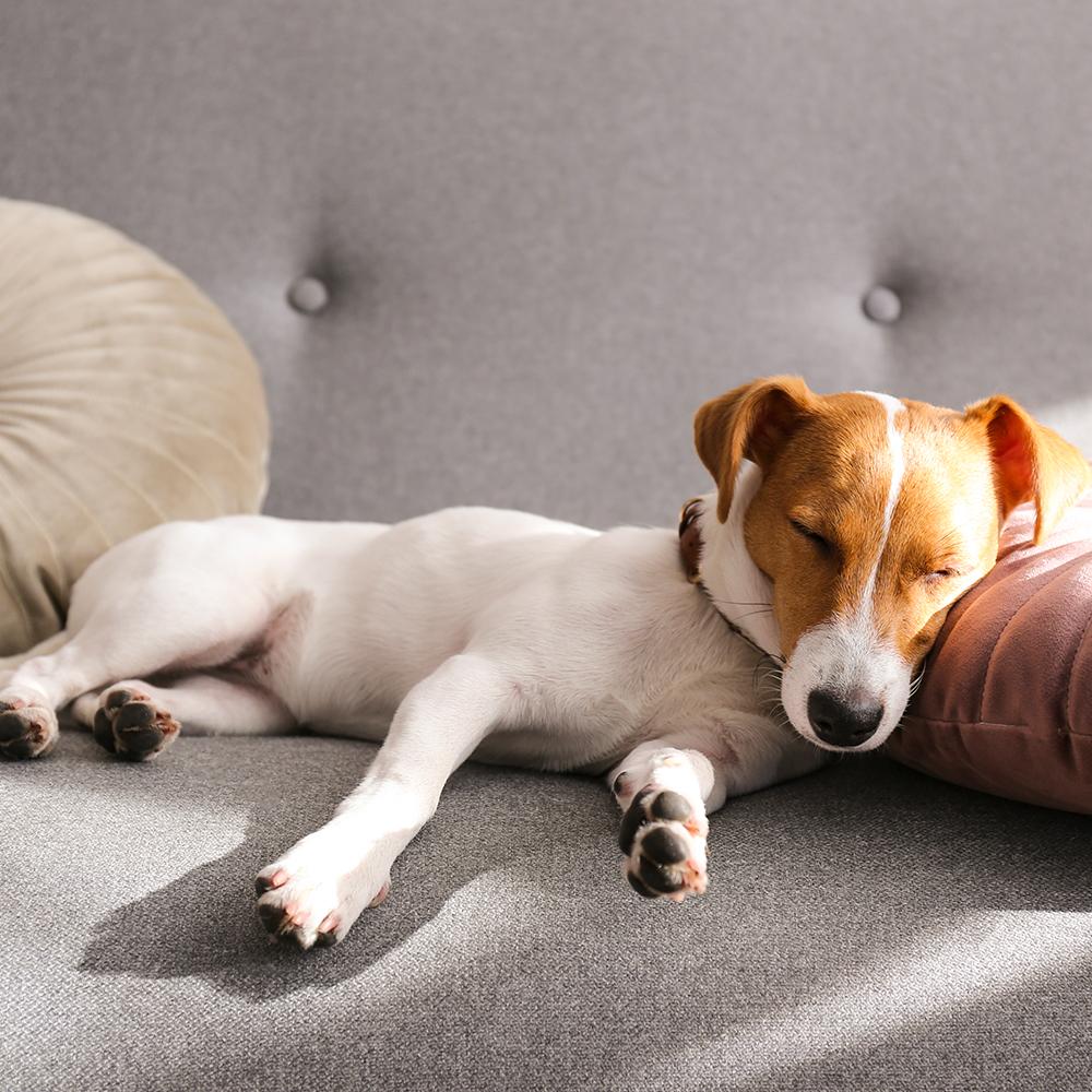 Warum bevorzugen Vierbeiner einen erhöhten Schlafplatz