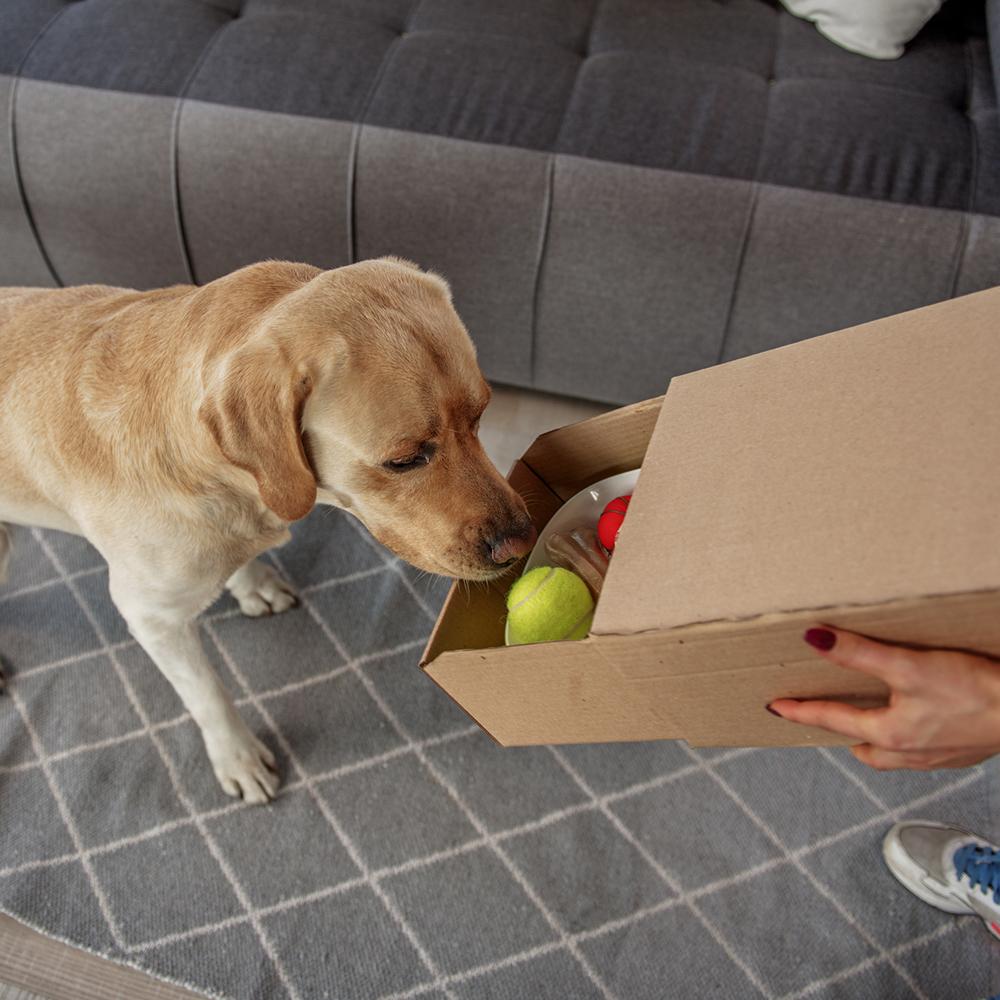 Hunde Zuhause sinnvoll beschäftigen